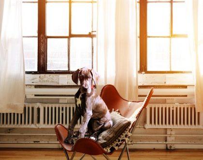 Descubre Segurcaixa Mascotas, el seguro ideal para tu perro o tu gato
