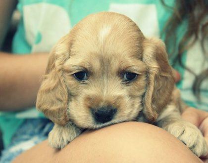 Seguro de Responsabilidad Civil para Perros
