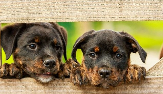 Mascotas Adeslas