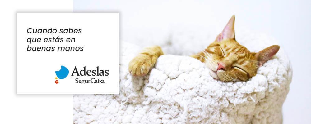 Aseguradora veterinaria para felinos