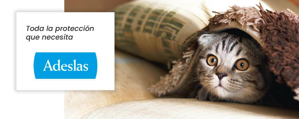 seguro para gatos SegurCaixa Adeslas