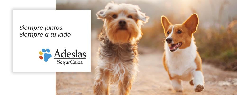 seguro para perros básico