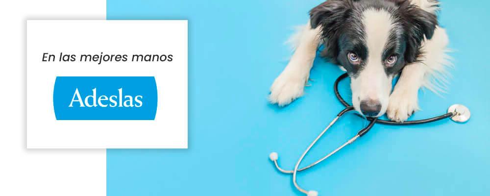 seguro veterinario perro Adeslas