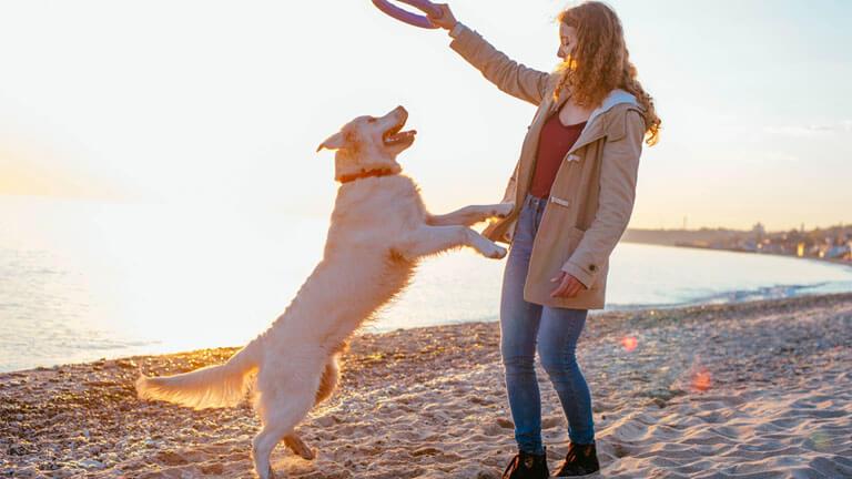 seguros para perros Adeslas mascotas